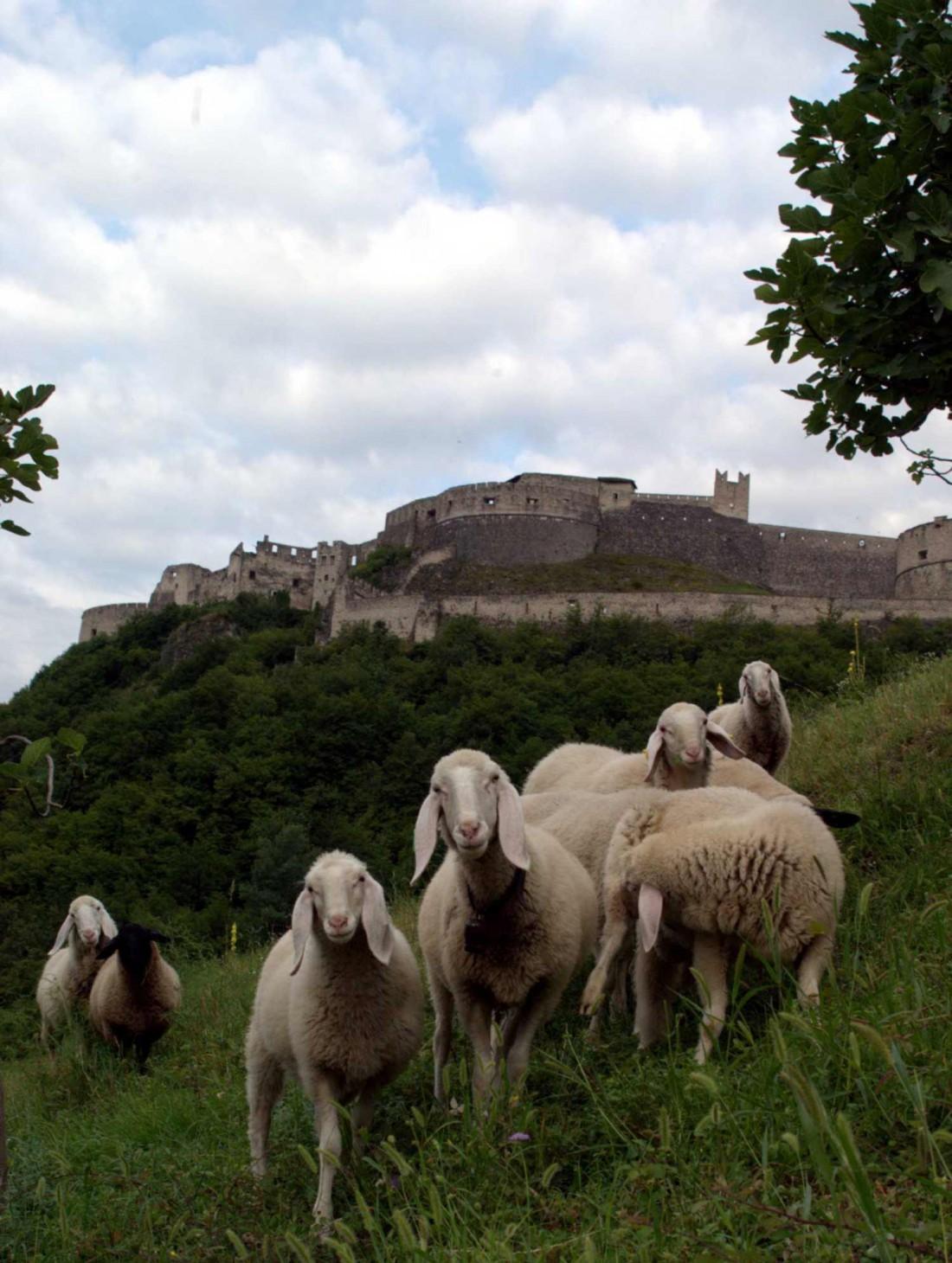 Scopri-Castelli-Castel-Beseno-02-VA-visitrovereto