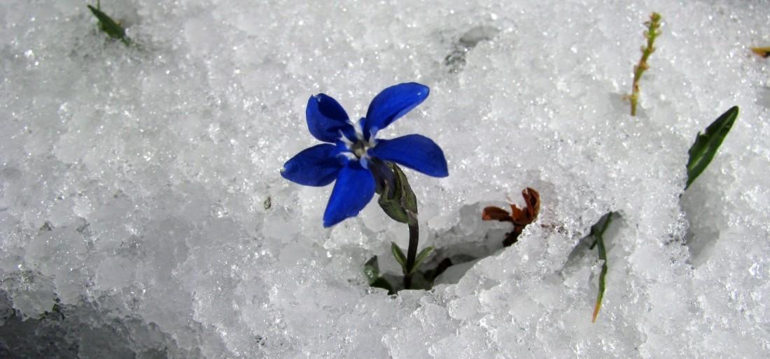 primavera-2