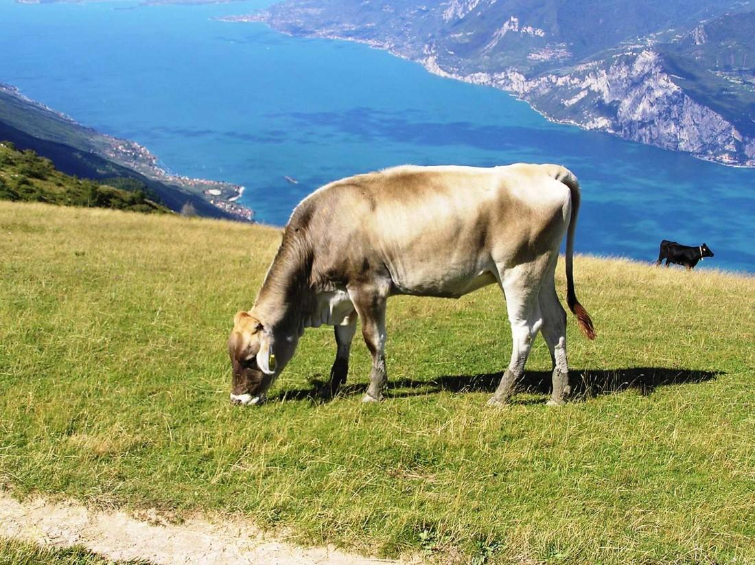 Estate-Parco-Monte-Baldo-vista-lago-Chievo