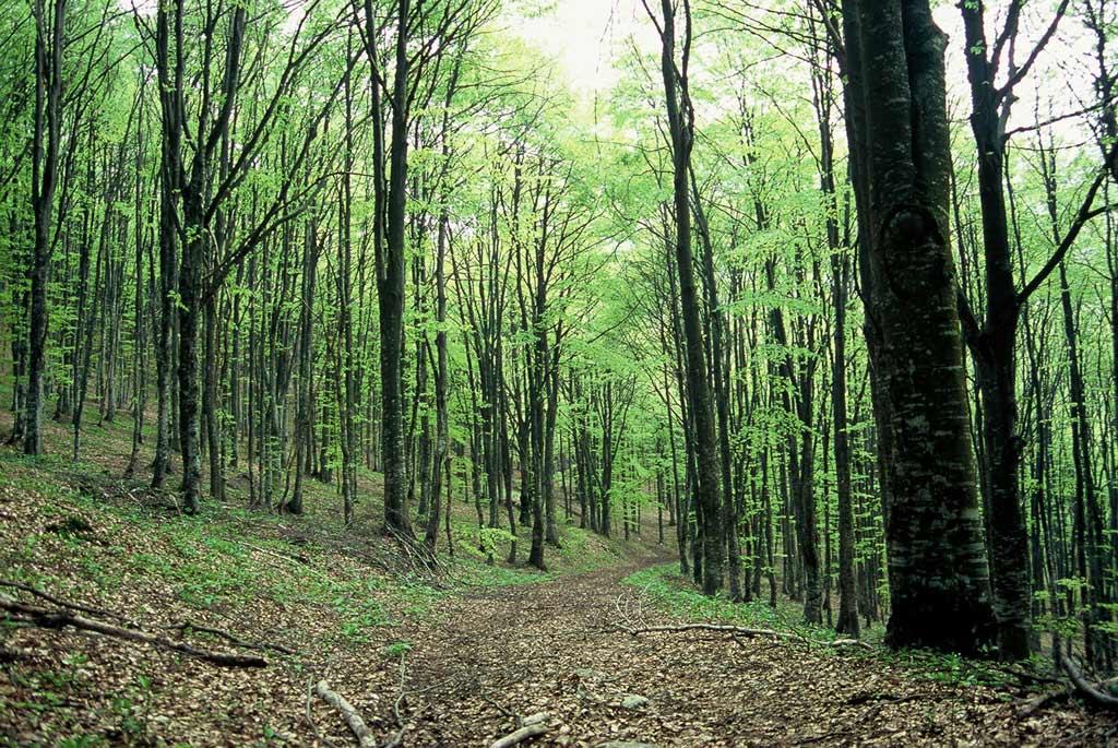 Vivi-Passeggiate-Escursioni-Terre-Verdi