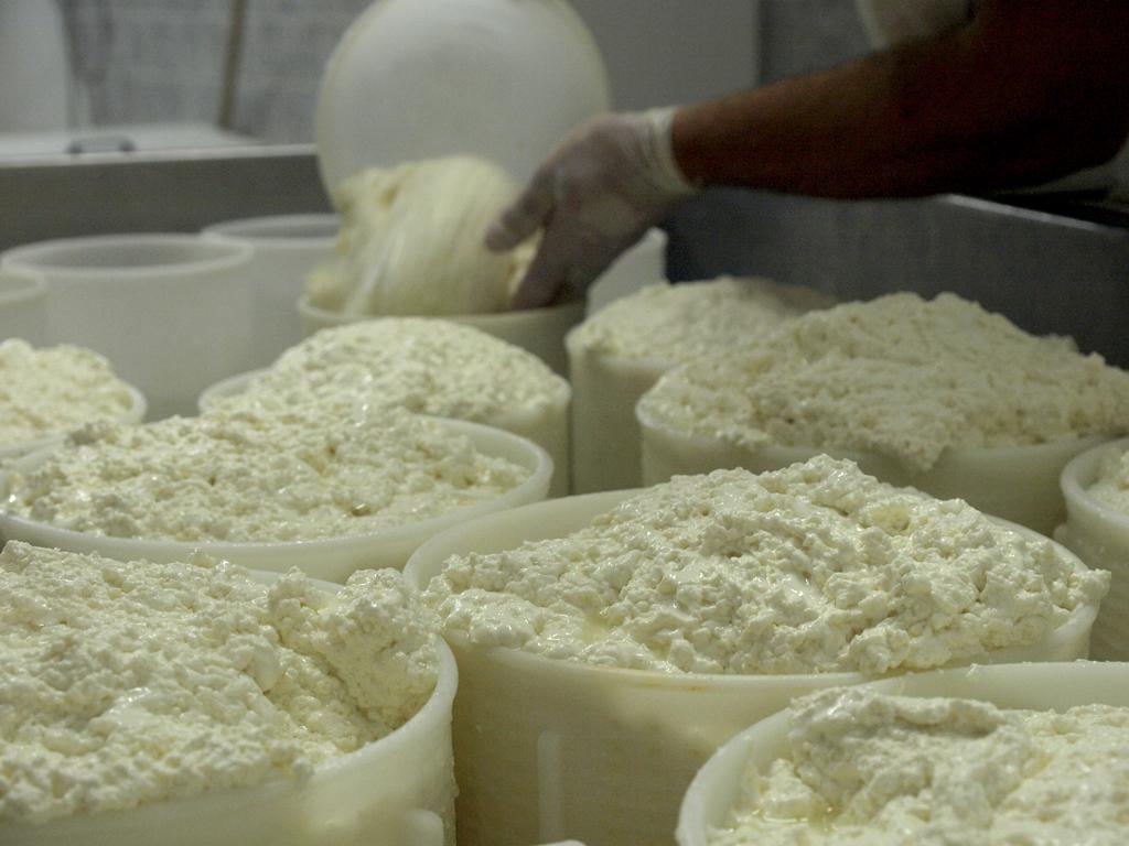 Dal latte al formaggio - Malga Mortigola - Monte Baldo-Fattoria didattica