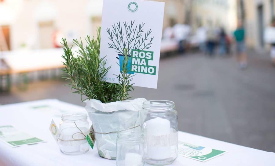Cena in bianco e verde (3)