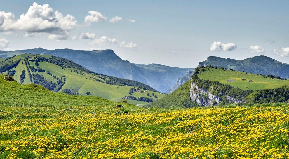Fioritura Monte Baldo