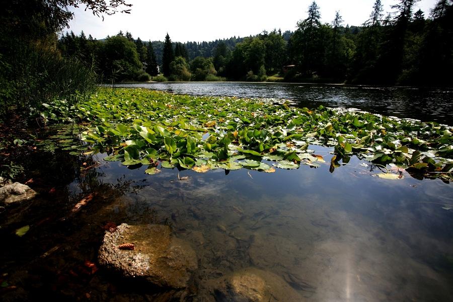 Estate fra terra ed acqua-Lago di Cei