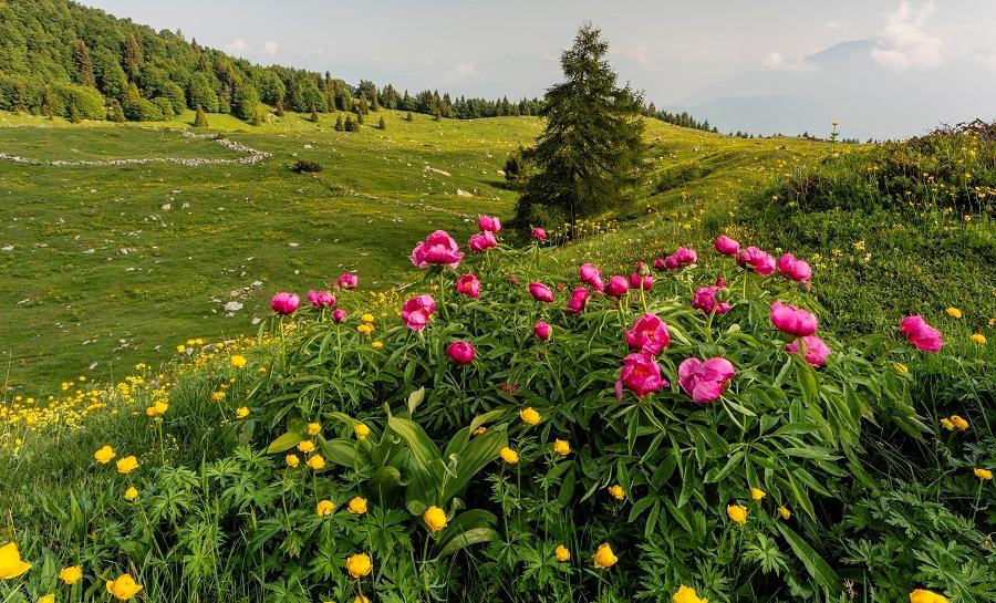 Monte Baldo-Foto Luciano Gaudenzio