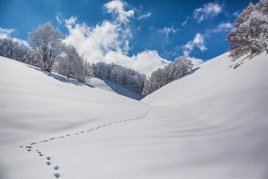 Parco del Monte Baldo-Foto Tommaso Prugnola
