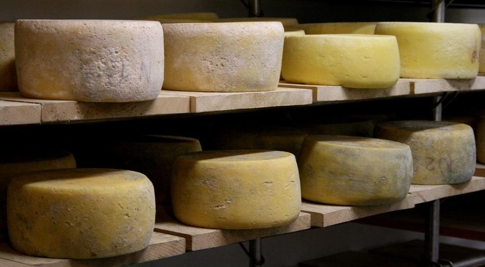 formaggio-malga-mortigola