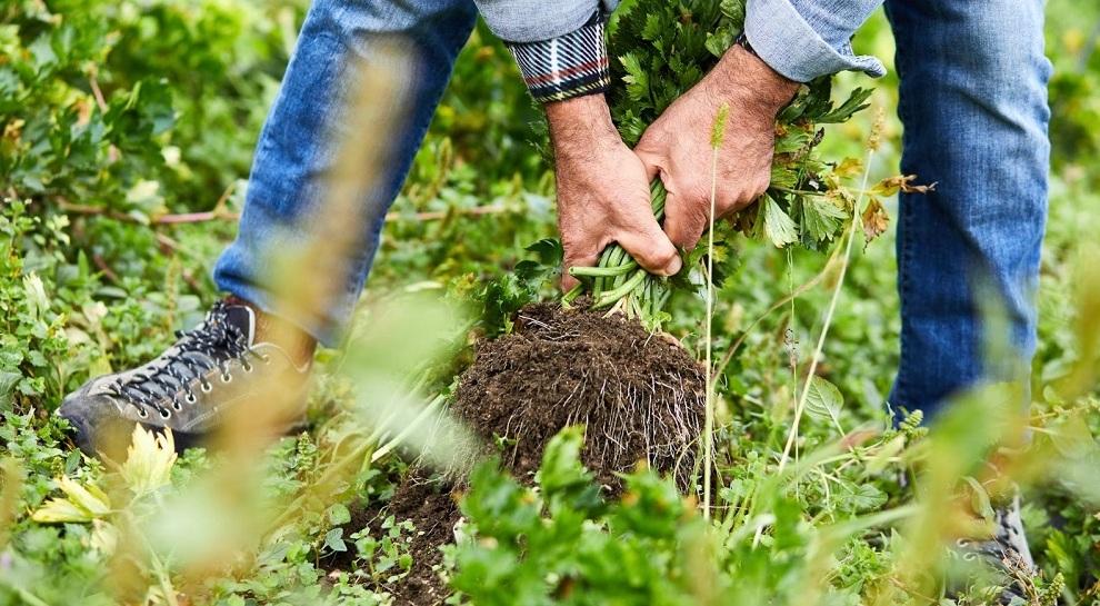 azienda-agricola-ivo-gelmini (1)