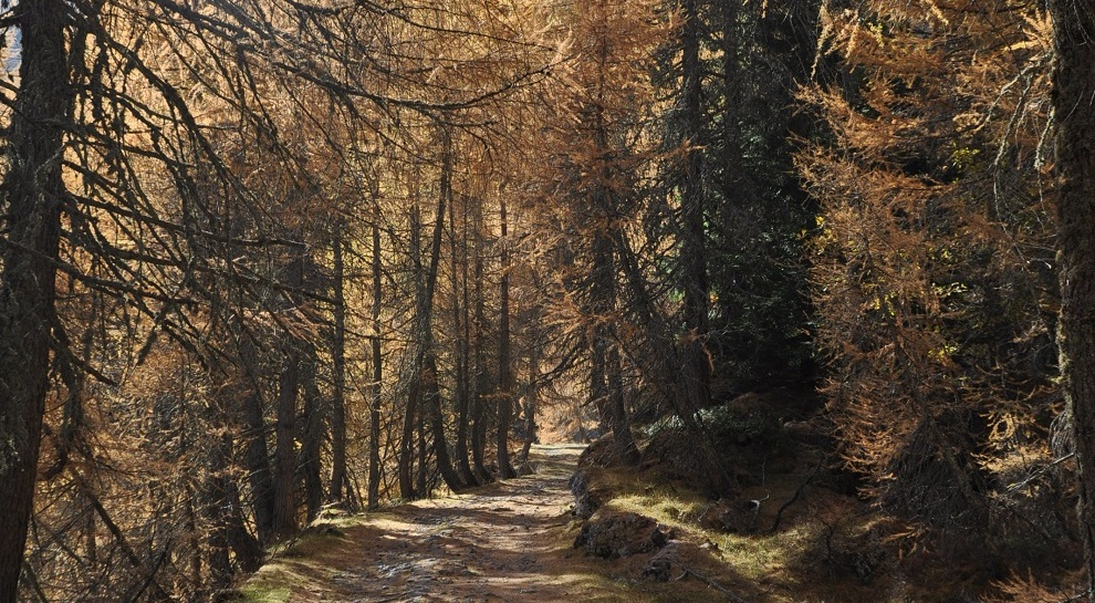 autunno-pasubio (1)